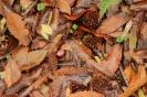 Follas Secas Castiros