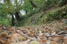 Cores do Outono_1