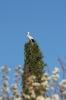 Cegoña en primavera